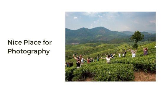 Nice Place for Photography in tea garden munnar