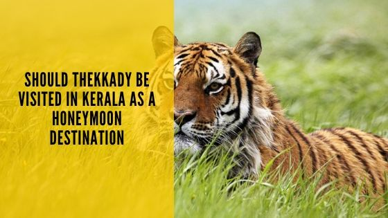 Should Thekkady be visited in Kerala as a Honeymoon Destination