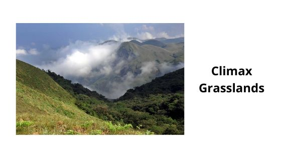climax grasslands in eravikulam national park munnar