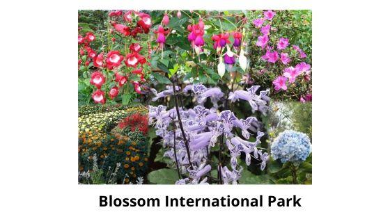 blossom park munnar tourism kerala india