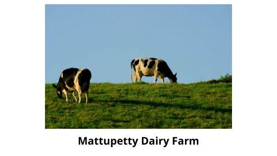 dairy farm munnar kerala india