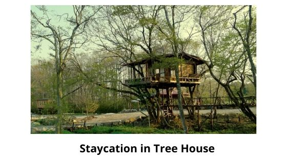 staycation is one of the Munnar local Sightseeing place
