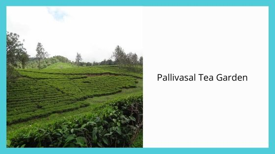 Pallivasal Tea Garden sightseeing places near munnar kerala india