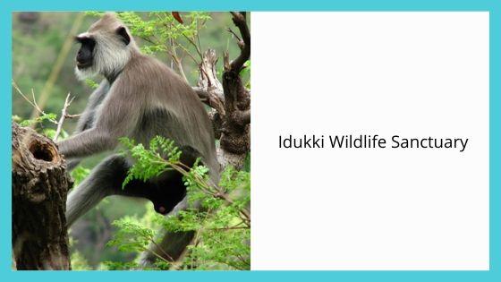 Idukki Wildlife Sanctuary kerala india